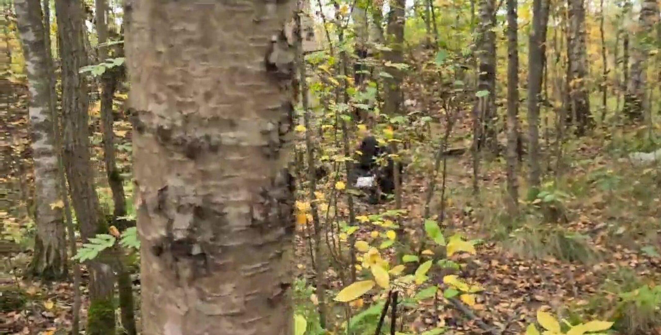 Kinky Rødhåret Pige Bliver Bollet Og Tisset På Ude I Skoven - Nudie